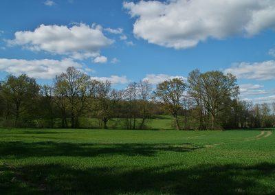 Feld am Waldrand