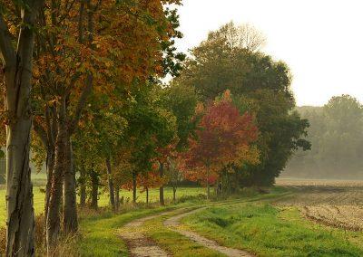 Feldweg am Buchenberg