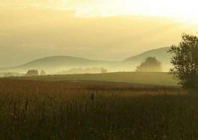Wiese im Morgenlicht